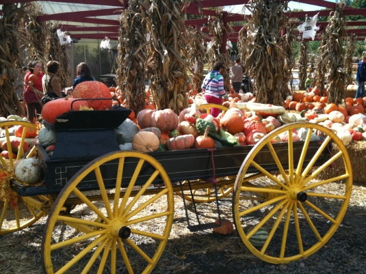 Charlie Brown Pumpkin Patch