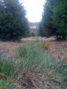 Van Wilgens Tree Farm
