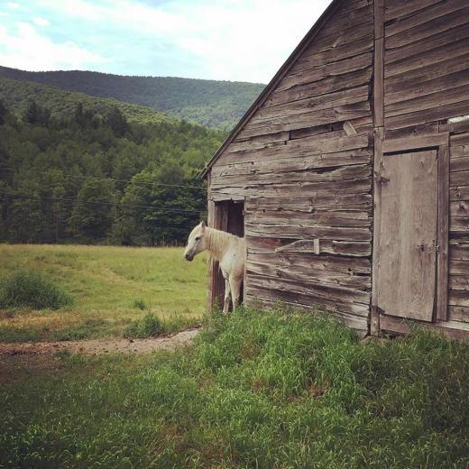 Horse & Barn